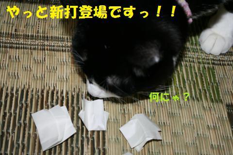 014_convert_20101110192430.jpg