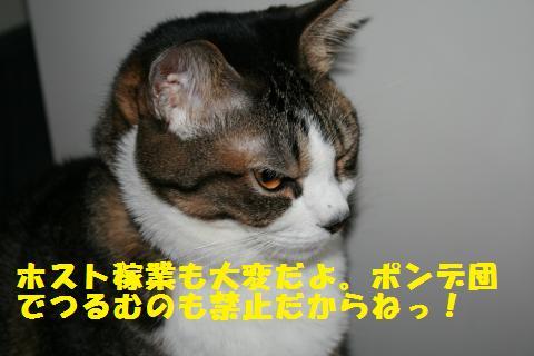 014_convert_20101126212413.jpg