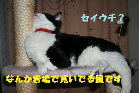014_convert_20101229221026.jpg