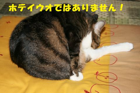 014_convert_20110123223743.jpg