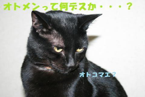 014_convert_20110124222210.jpg