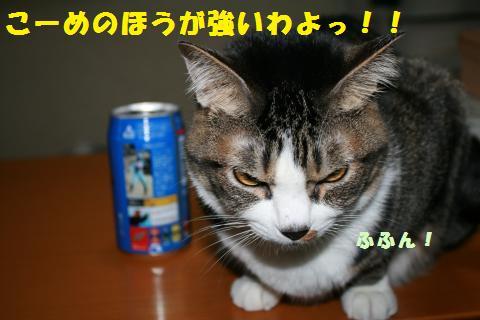 014_convert_20110226214905.jpg