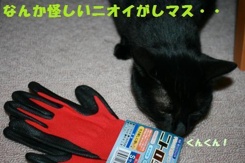 014_convert_20110329230626.jpg