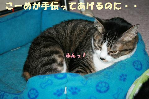 014_convert_20110618185008.jpg