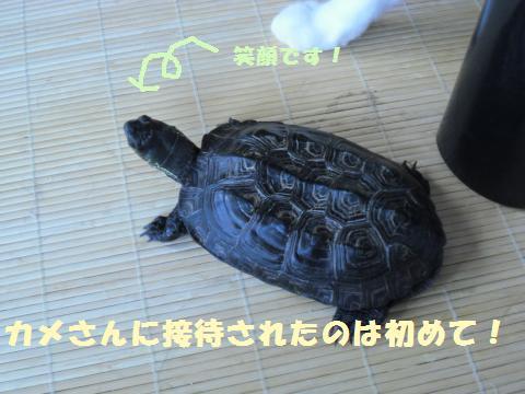 014_convert_20110715142237.jpg