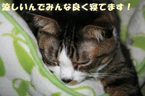 014_convert_20110801223253.jpg
