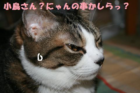 014_convert_20110828225602.jpg