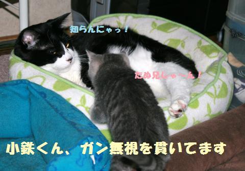 014_convert_20111122215818.jpg