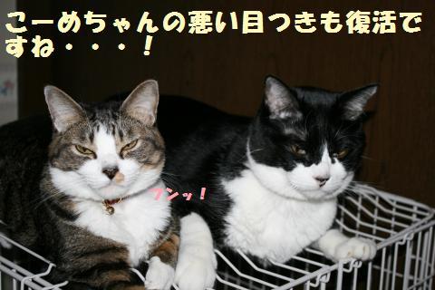 014_convert_20111222203035.jpg