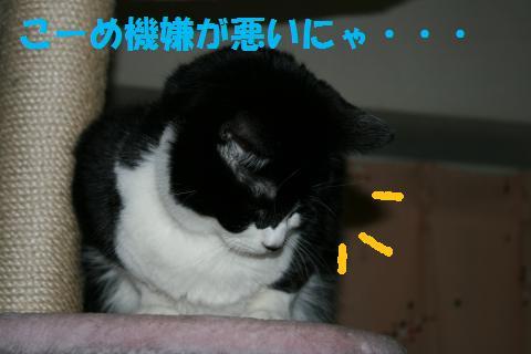 015_convert_20100205225259.jpg