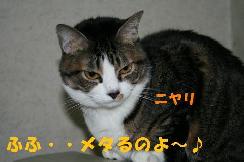 015_convert_20100307210247.jpg