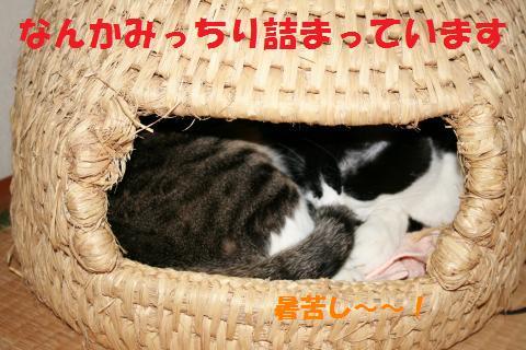 015_convert_20100414002028.jpg