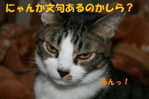015_convert_20100430224722.jpg