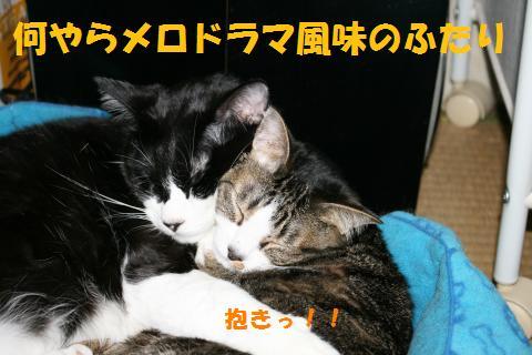015_convert_20100530220709.jpg