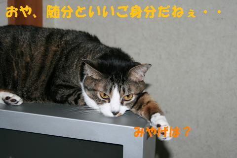 015_convert_20100807132820.jpg
