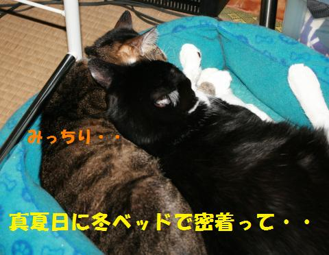 015_convert_20100912204047.jpg
