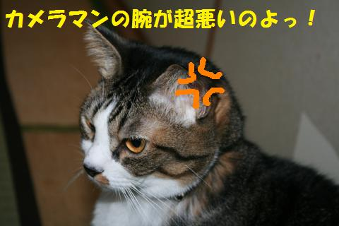 015_convert_20101027221328.jpg