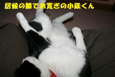 015_convert_20101228220429.jpg