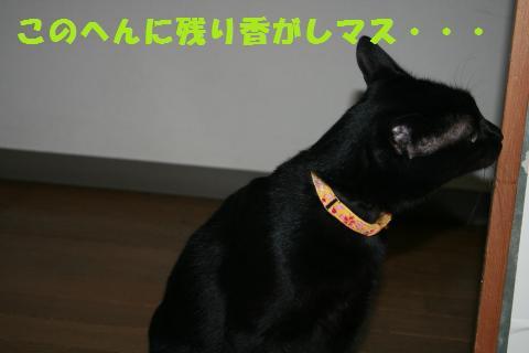 015_convert_20110122192804.jpg