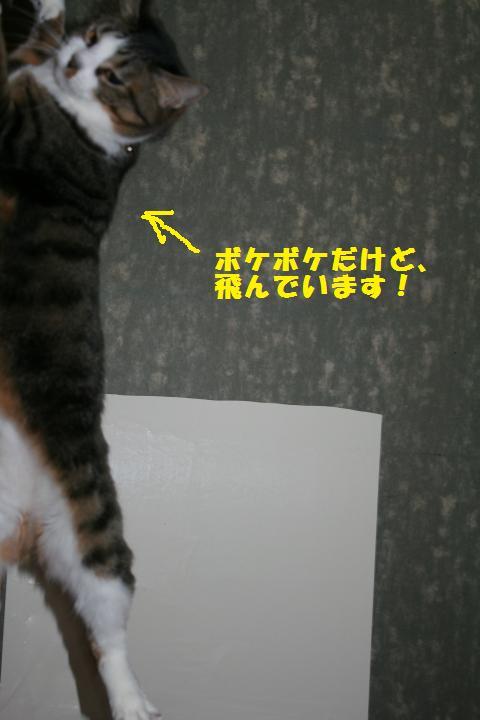 015_convert_20110220231040.jpg
