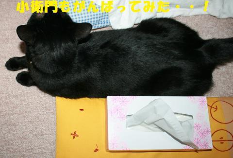 015_convert_20110607224955.jpg
