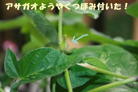 015_convert_20110807155024.jpg