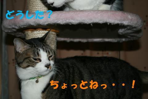 016_convert_20100205225422.jpg