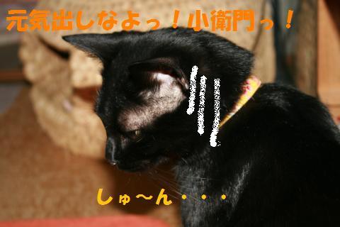 016_convert_20100417234601.jpg