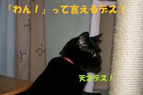 016_convert_20100510230301.jpg