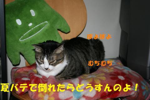 016_convert_20100824215912.jpg