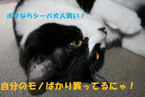 016_convert_20100829204140.jpg
