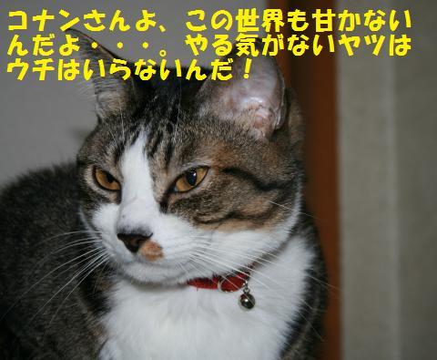 016_convert_20101031164730.jpg
