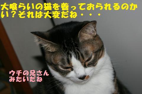 016_convert_20101126212550.jpg