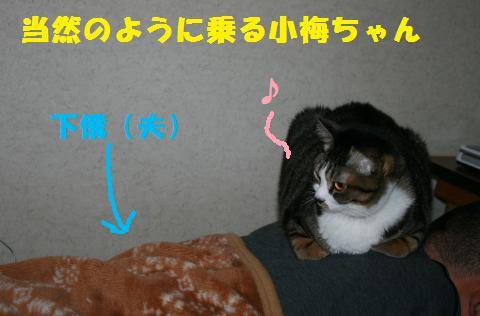 016_convert_20110102213011.jpg