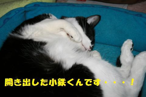 016_convert_20110401185240.jpg