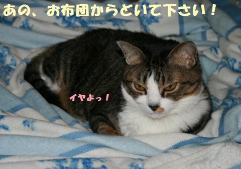 016_convert_20110912195321.jpg