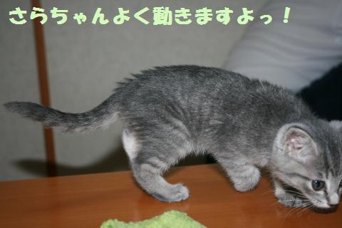 016_convert_20111102234515.jpg
