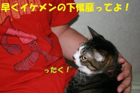 017_convert_20100504213201.jpg