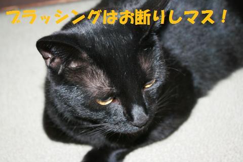 017_convert_20100510230441.jpg