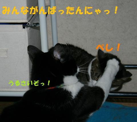 017_convert_20100630192500.jpg