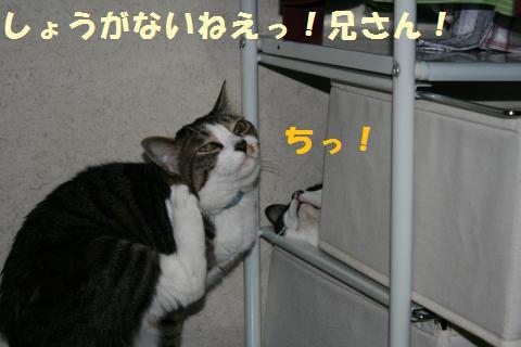 017_convert_20100705225949.jpg