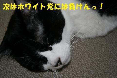 017_convert_20100713001455.jpg
