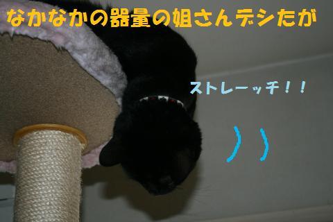 017_convert_20100812185631.jpg