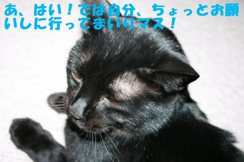 017_convert_20110415192731.jpg