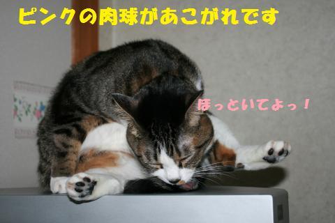 017_convert_20110419204653.jpg