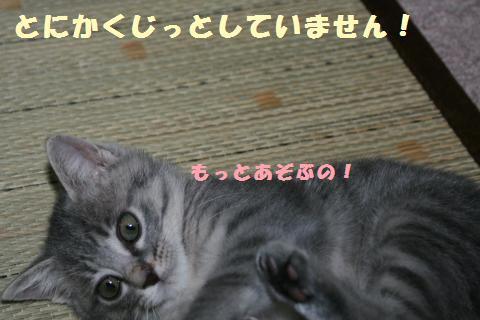 017_convert_20111121183943.jpg