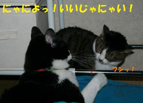 018_convert_20100630192556.jpg