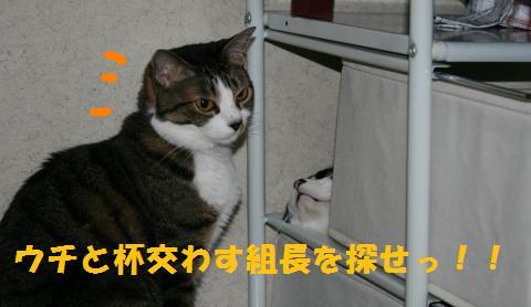 018_convert_20100705230031.jpg