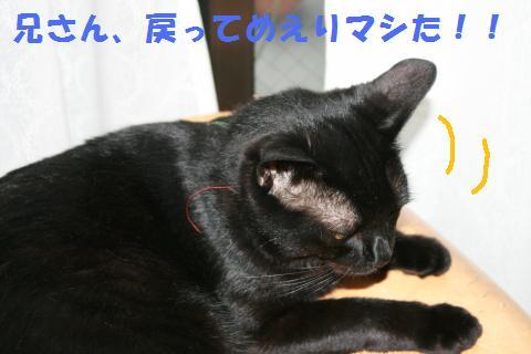 018_convert_20100807134223.jpg