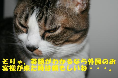 018_convert_20101126212720.jpg